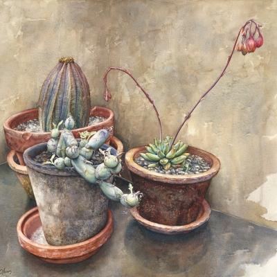 19-Spring-Cacti-22.25_-x-24.25_-watercolour