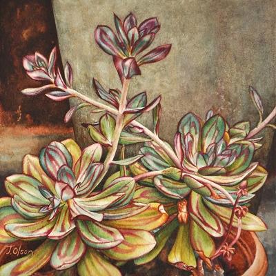 25-Echevarias-8_-x-8_-watercolour