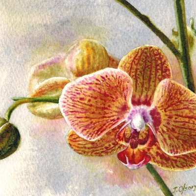 34-Orchid-Bud-5_-x-7_-watercolour