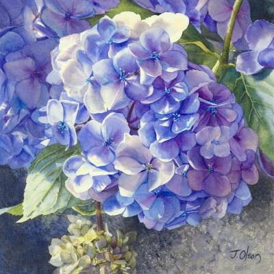 4-Hydrangea-11_-x-11_-watercolour