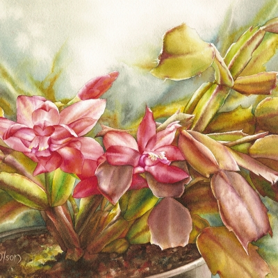40-Scarlet-Cactus-922-x-1022-watercolour
